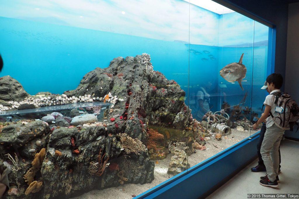 Manazuru Shell Museum - Manazuru