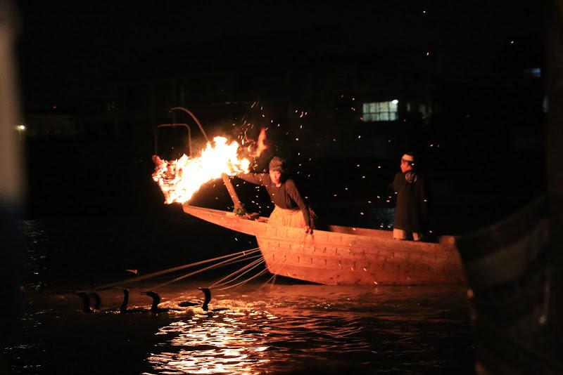 Kormoran-Fischerei (Ukai) im Nagaragawa/Gifu