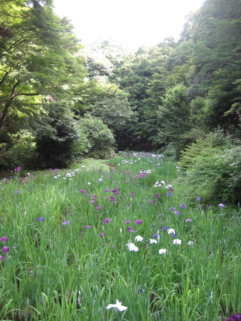 IMG_2364 - Meiji Jingu