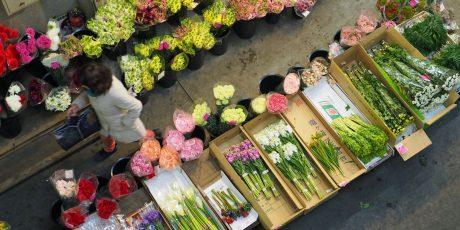 Besichtigung des Blumenmarktes von Ōta ‒  Japans zentralem Großhandelsmarkt für  Blumenauktionen
