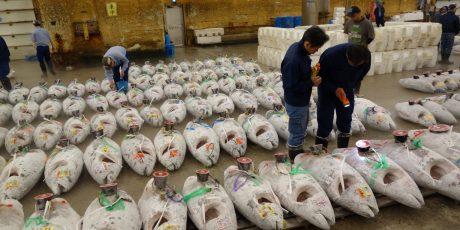 """Klaus Scherer: """"Thunfisch auf Tour. Tokyos Fischmarkt zieht um"""""""